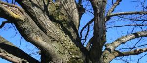 Permalink auf:Im Einklang mit der Natur